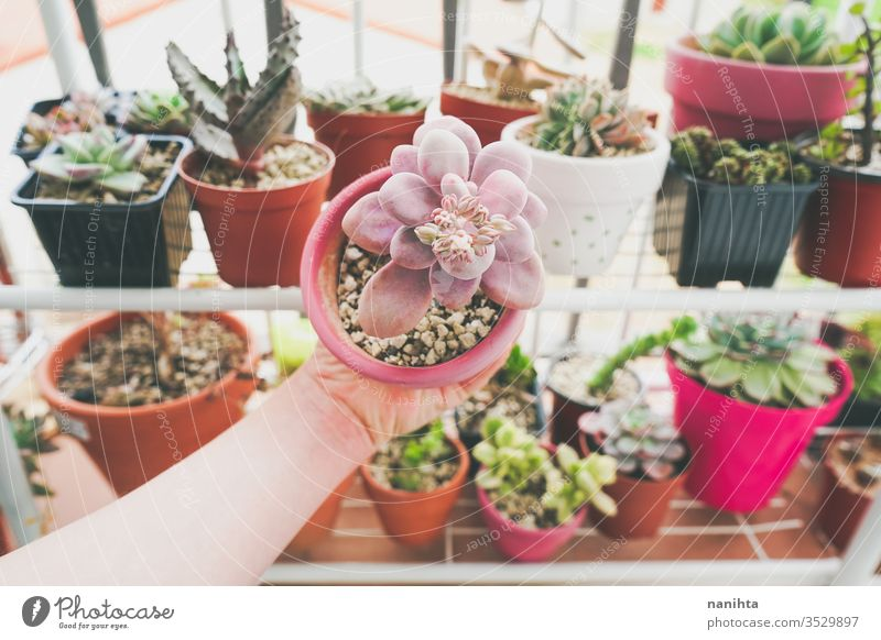 Little garden of mixed succulent plants gardening home decor exotic cactus fat plants beautiful exotic plants leaves pot potted plants hobby leisure time color