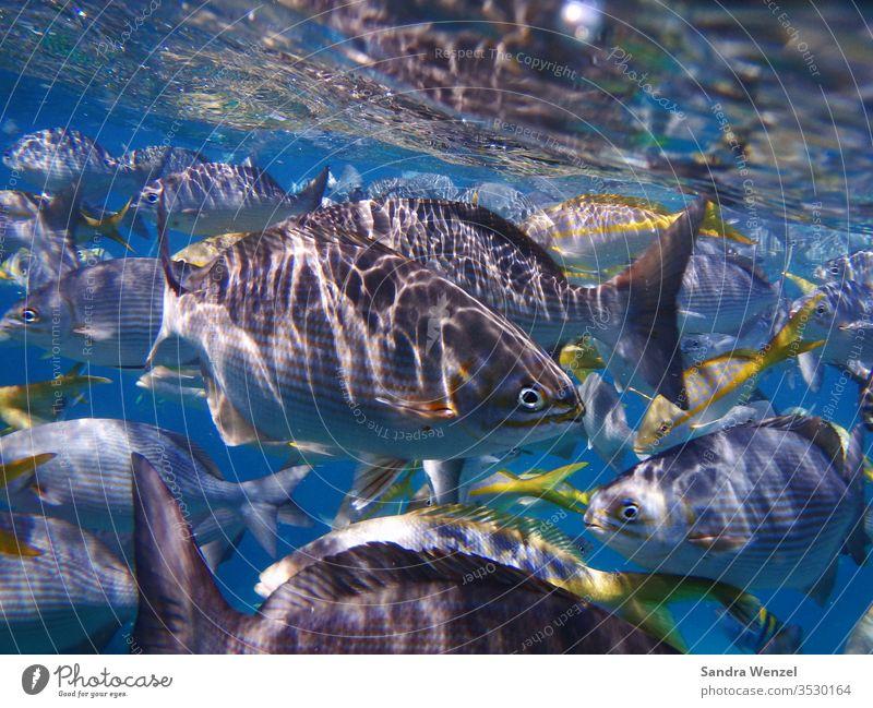 OLYMPUS DIGITAL CAMERA Fische Underwaterworld Unterwasser Kuba Korallenriff Schnorcheln Atlantik Karibik Wasser Seewasser Artenvielfalt Tauchen Tauchgang