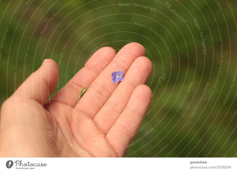 Purple speedwell blossom lies in one hand bleed flowers honorary prize by hand Beauty & Beauty Considerate Delicate Small purple Nature Plant spring green