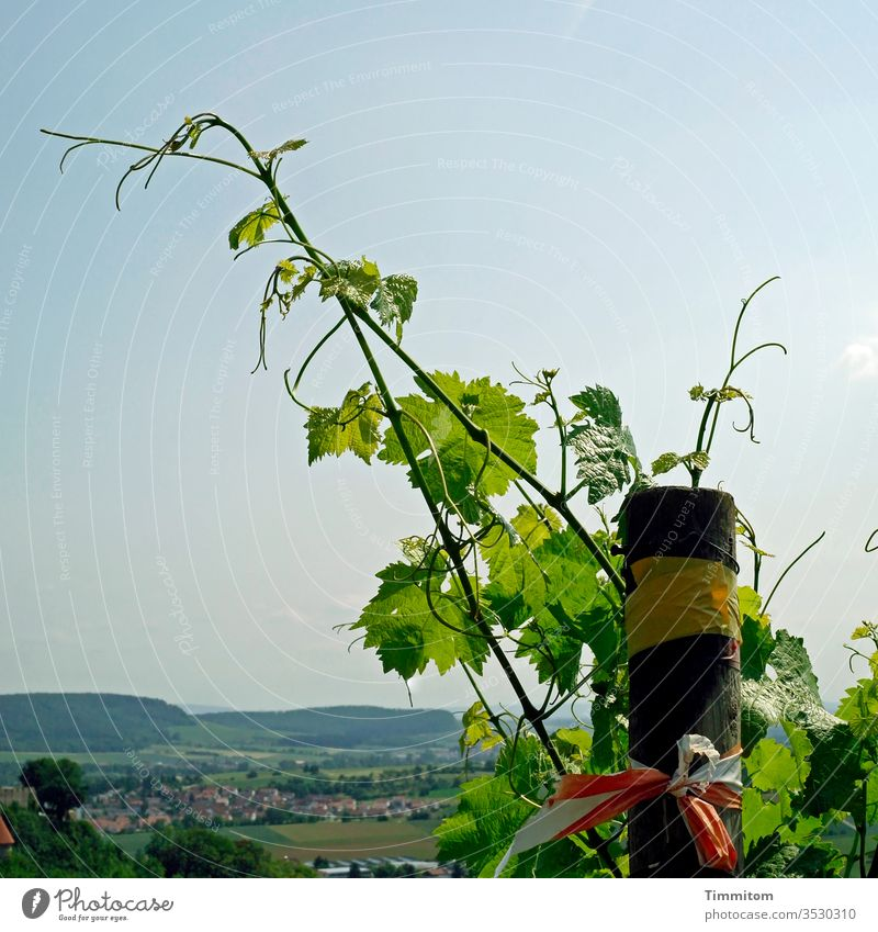 Grapevines over Swabian village Vine Vineyard Growth green Nature Plant Wine growing Pole Landscape hillock Village