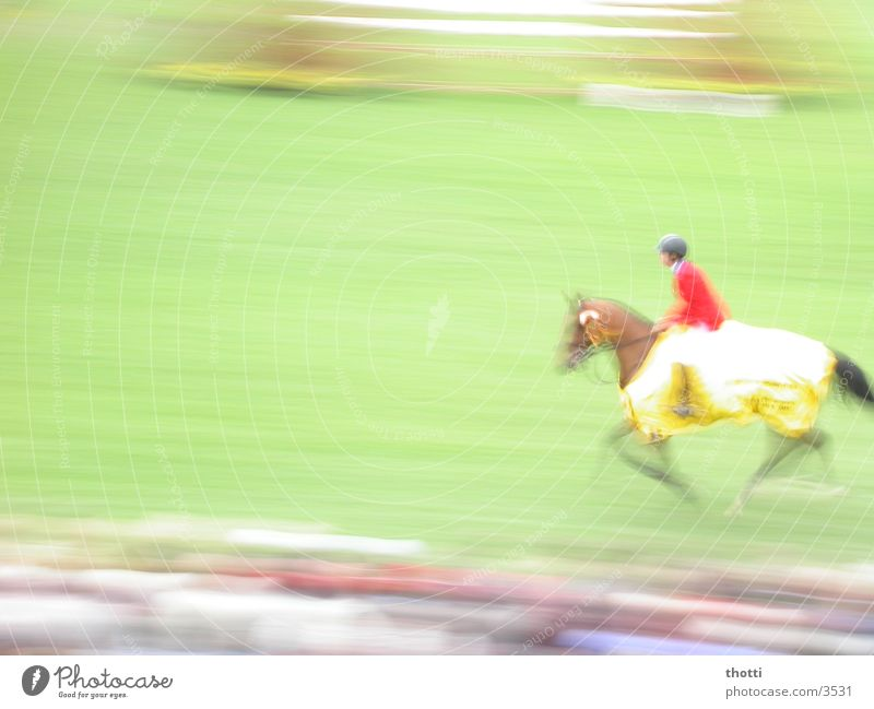 Sports Movement Speed Horse Equestrian sports Aachen Show jumping