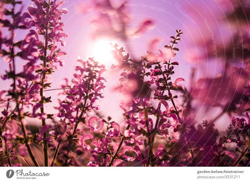 Spring Blossoms Purple Room purple flowers in the foreground Nature spring Colour photo Exterior shot Close-up already Detail Blossoming Shallow depth of field