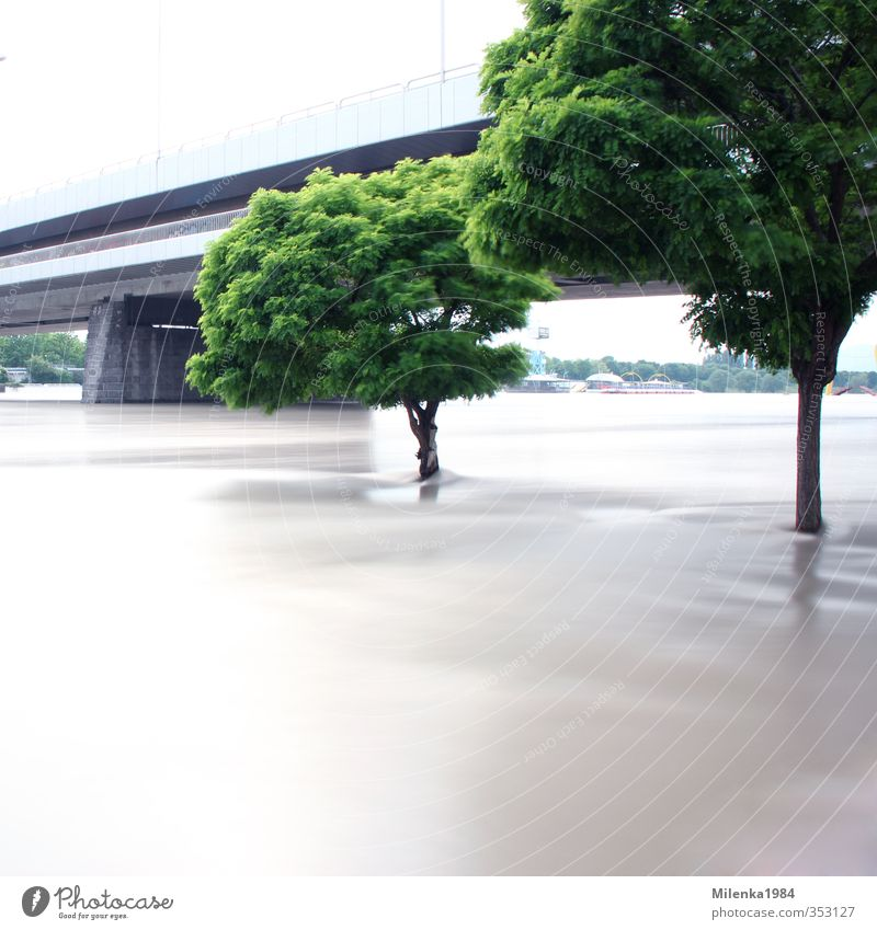 high water Environment Nature Landscape Plant Climate Climate change Weather Bad weather Storm Rain River bank Flood Danube Vienna relief channel Tree Bridge