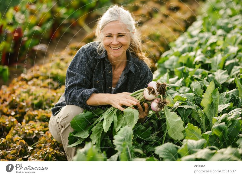 Smiling Senior woman working on field picking vegetables in greenhouse smile senior happy turnip sustainability produce fresh garden farmer nature harvest
