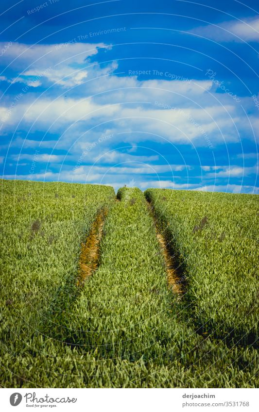 """"""" Towards the horizon """". Blue sky covered with clouds, a green field. In the foreground traces of a tractor in the wheat field. Field Grain Sky Agriculture"""