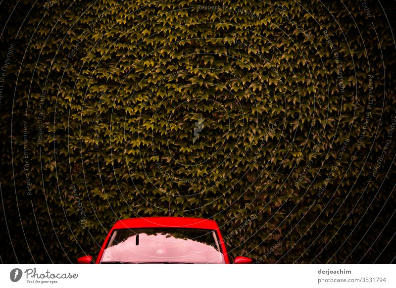 A red car, only windshield and roof can be seen, stands in front of a brown wall of leaves. Colour photo Red Exterior shot Deserted Light Car Day Calm