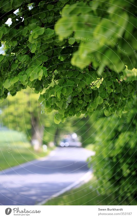 My beautiful Rügen Trip Far-off places Summer Environment Nature Plant Beautiful weather Tree Foliage plant Lime tree Forest Traffic infrastructure Street