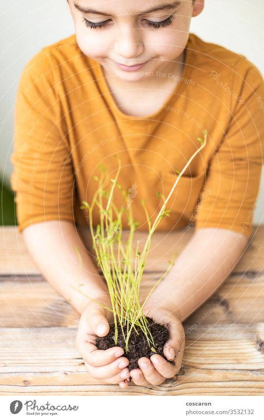 Kid's hands holding a young plant agricultural agriculture background beautiful beginning bokeh care child childhood children concept conservation cultivate