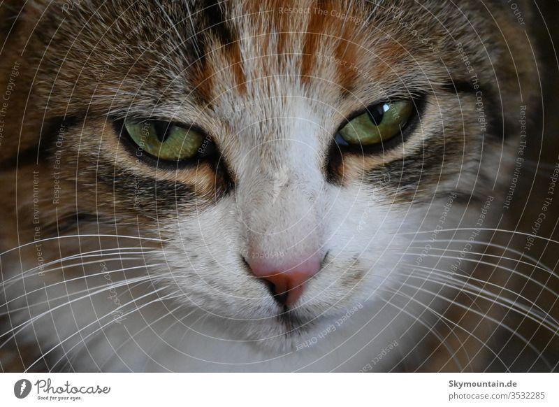 cat's eyes Cat kstzenauge Pet girlfriend gefahrin Cuddling Trust animal love Cat and mouse