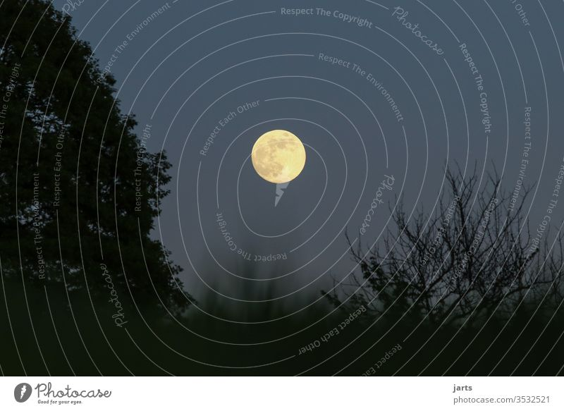 full moon Full  moon Night Sky Moon conceit Long exposure tree Nature Moonlight Colour photo Light (Natural Phenomenon) Shadow Silhouette Exterior shot Deserted