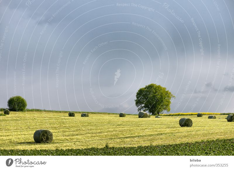 Schwarzenburgerland Environment Nature Landscape Plant Animal Clouds Summer Autumn Tree Field Moody Agriculture Hay bale Thunder and lightning Colour photo