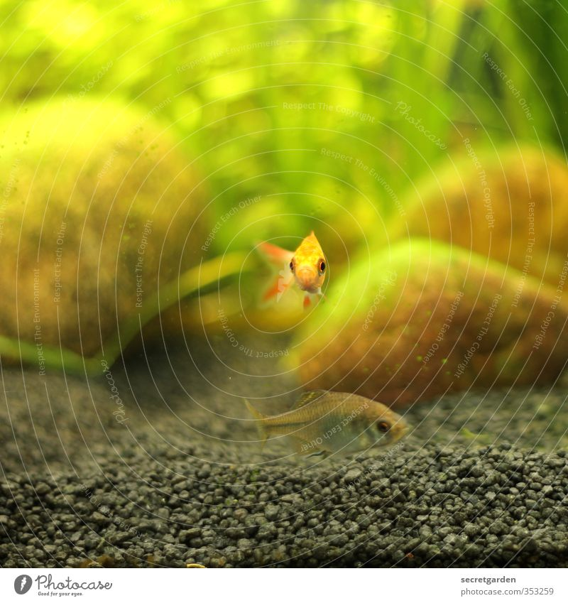 ...like a fish in water. Swimming & Bathing Animal Fish Aquarium 1 Baby animal Looking Small Curiosity Brown Yellow Green Brave Love of animals Sadness