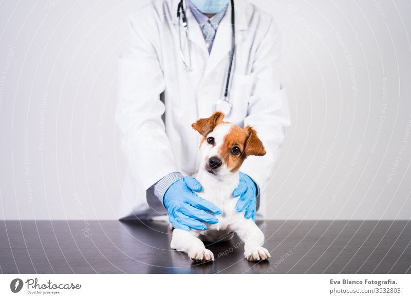 veterinarian man working on clinic with cute small jack russell dog. Wearing protective gloves and mask during quarantine. Using stethoscope.Pets healthcare