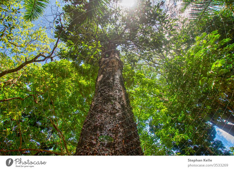 Fresh green forest from lower perspective, while the sun is shining. tree summer up background nature leaf spring branch trunk sunlight foliage outdoor