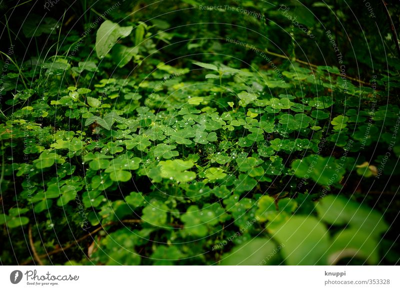 luck Environment Nature Plant Elements Water Drops of water Sun Sunrise Sunset Sunlight Spring Summer Beautiful weather Rain Warmth Grass Fern Leaf