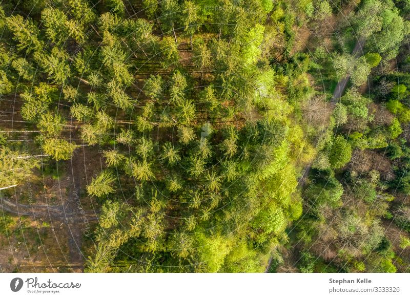 Vertical drone shot at the top of green trees in a german forest. background environment spring pattern summer texture nature sun leaf landscape beautiful