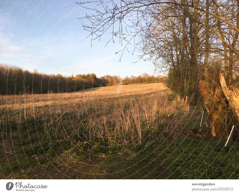 fallow field at the edge of the forest in summer Meadow Sunset sky Sky Edge of the forest Grass Brown tree Forest green Landscape Exterior shot Nature Deserted