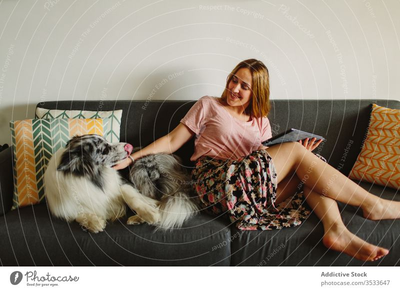 Happy woman with tablet petting dog sofa home smile rest comfort cozy female owner touch happy together love barefoot positive collie care couch living room