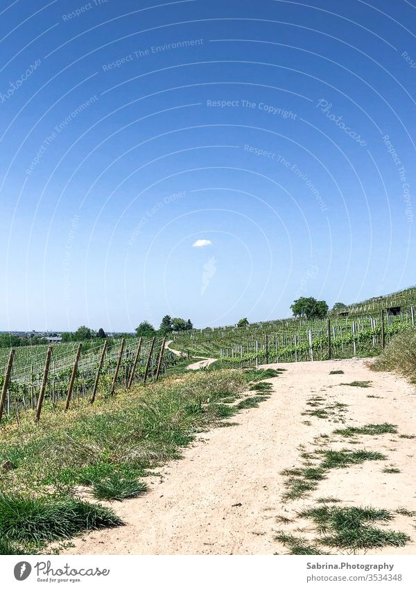 Deserted path in the vineyards of Schriesheim with a cloud in the sky Vineyard Lanes & trails Sky Clouds in the sky Cloudless sky To go for a walk Summer