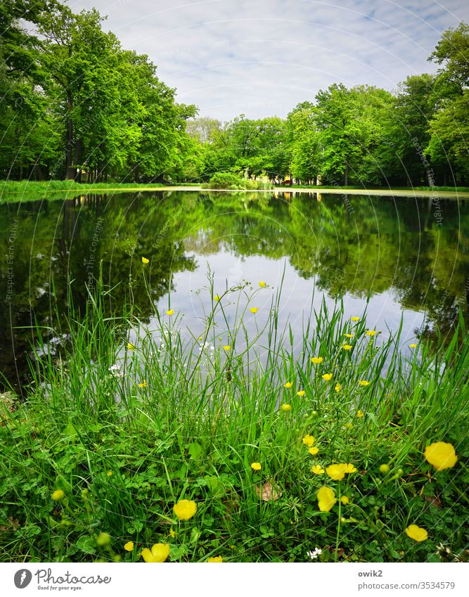 palace park Park Idyll buttercups Grass Water Lake Pond Lakeside Surface of water Mirror image Reflection Water reflection Sky Clouds Island huts Exterior shot