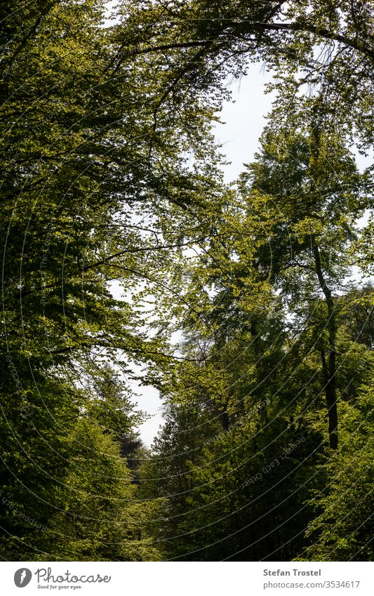 View into the treetops with the deciduous trees which have a beautiful leaf autumn natural foliage pine nature dawn ecology fall morning plant road beech scenic