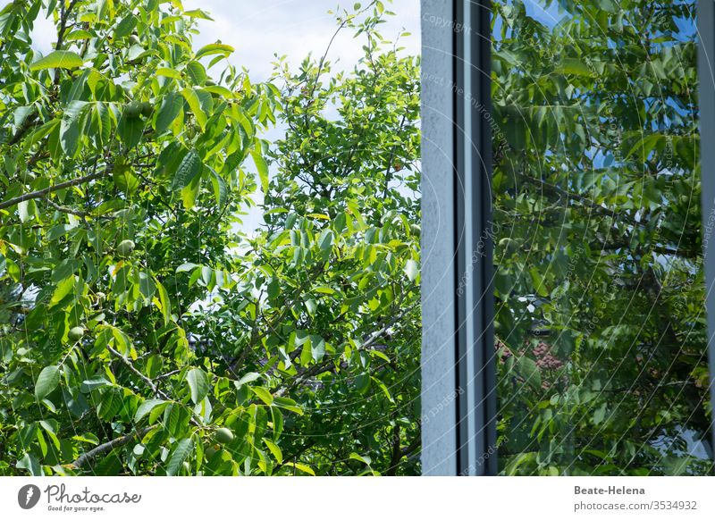 Summertime: lush green in front of an open window Sky tree Field Exterior shot bush shrubby leaves Day Environment Blue bushes Window Window pane Window frame