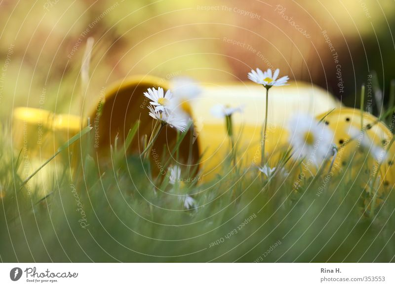 lie on grass Relaxation Calm Nature Plant Spring Summer Beautiful weather Grass Daisy Garden Meadow Blossoming Lie Yellow Green Emotions