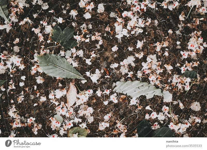 Beautiful background of white tree flowers spring delicate fragile dark leaf leaves wallpaper walldrop backdrop nature natural beautiful bloom blossom