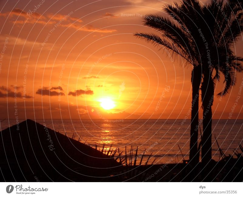 A perfect sunset Sun Sunset Spain Palm tree Water Ocean Atlantic Ocean Pacific Ocean Clouds Sky Red Orange Passion Black Island Vacation & Travel