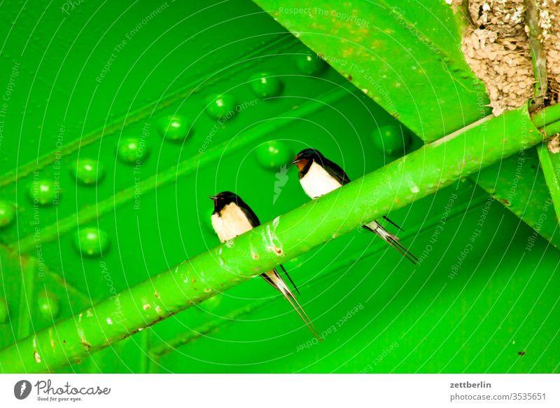 Two swallows Swallow two Couple Sit incubate Summer conduit Migratory bird birds Animal Break rustic hirundo Deserted Copy Space bridge Niche rest