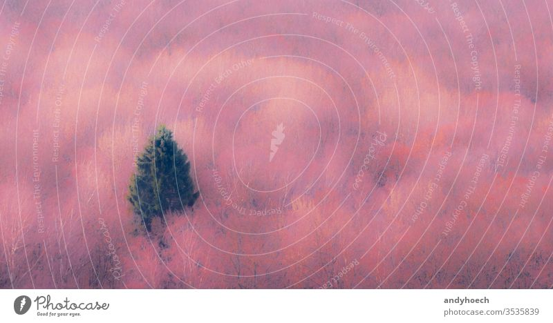 The single conifer in the pink forest abstract Art Background beautiful beauty in nature blur blurry cold temperature color colored colorful concept coniferous