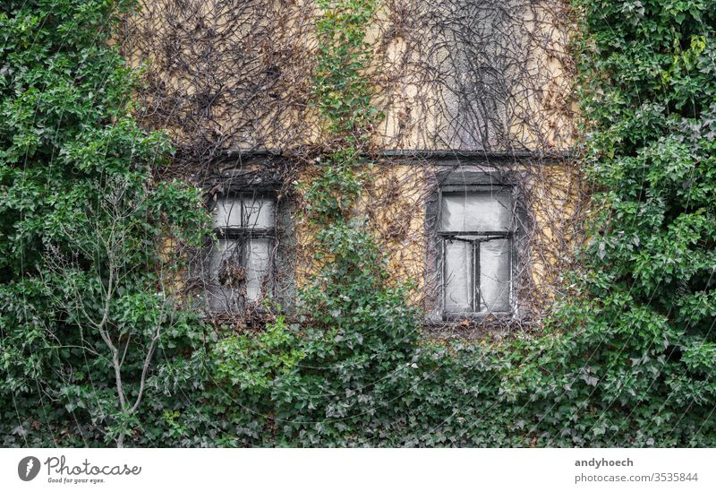 Two old box windows and a overgrown facade abandoned ancient apartment architecture Background broken building building exterior built structure concept