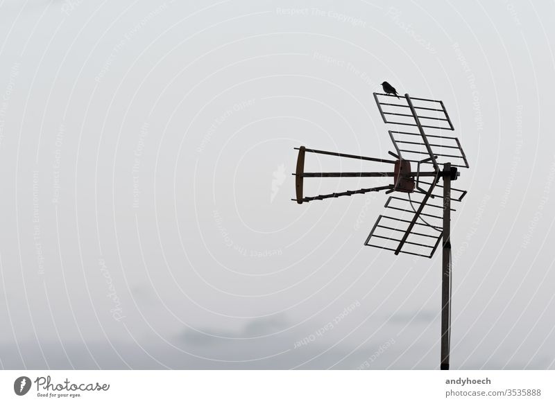 A bird is sitting on the analog antenna bad news breaking broadcast broadcasting chat communicate communication connect connecting copy space daily device