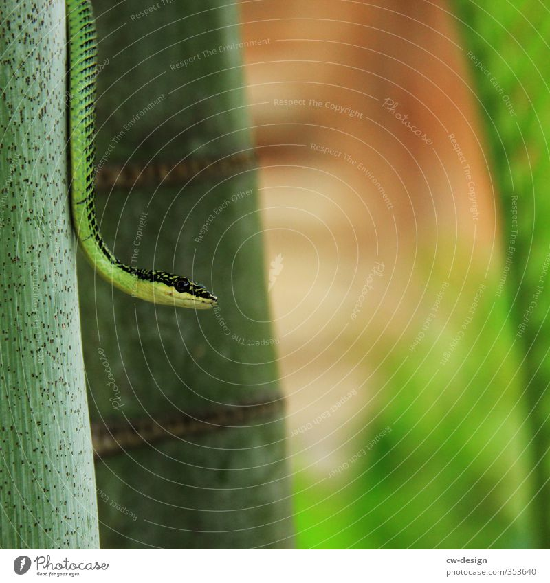 Nature Plant Green Tree Landscape Animal Environment Park Beautiful weather Virgin forest Snake Bamboo stick