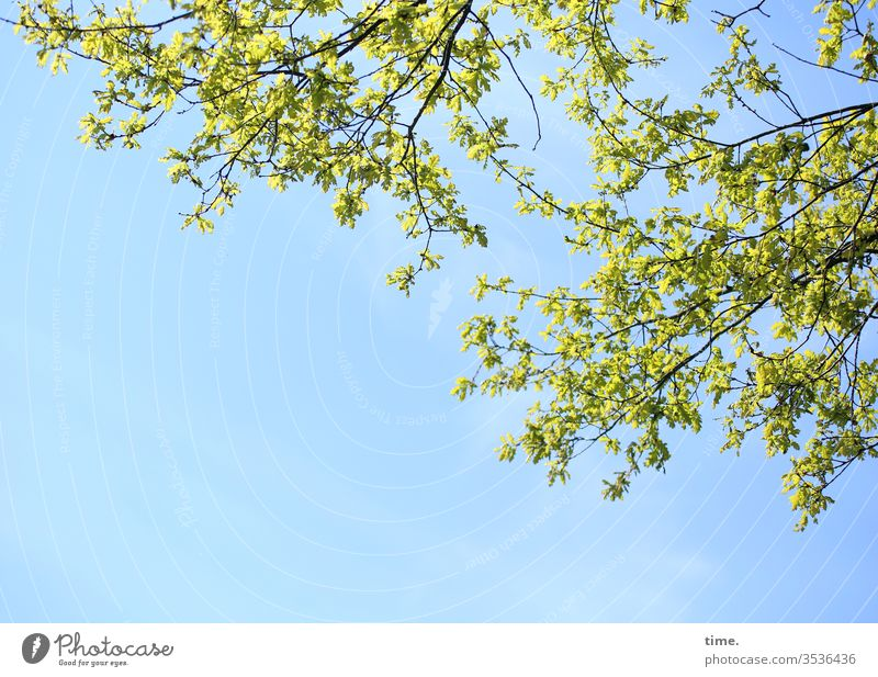 awakened Sky Sunlight Branch Twig Life awakening spring Wake up Fresh vivacious Joie de vivre (Vitality) zest for life hungry for life green