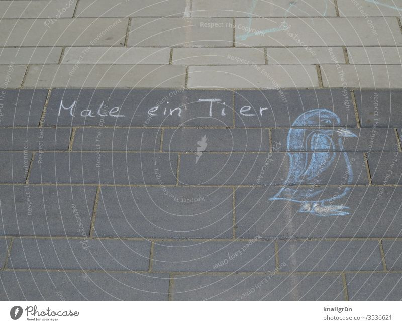 """""""Paint an animal"""" written with chalk on the sidewalk, next to it a chalk drawing of a penguin Chalk drawing Penguin Painting (action, artwork) birds Animal"""