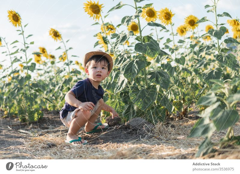 Happy little boy in green field cheerful sunflower excited nature carefree hat child joy childhood glad positive countryside freedom lifestyle adorable cute