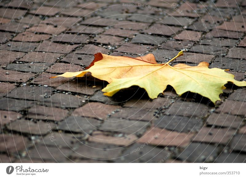 leaf Plant Tree Leaf Street Stone Gloomy Colour photo Exterior shot Deserted Copy Space top Copy Space bottom Shallow depth of field