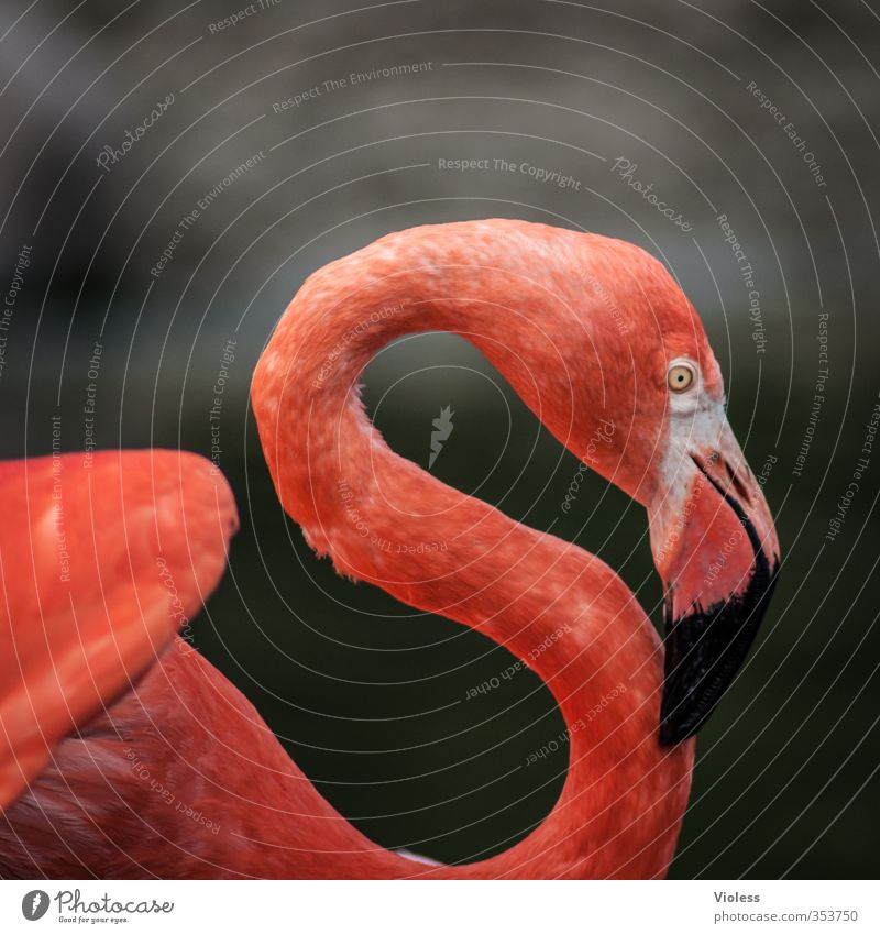 "red ""S"" Animal Bird Flamingo Animal face Zoo Esthetic Elegant Kitsch Red Colour photo Exterior shot Copy Space top"