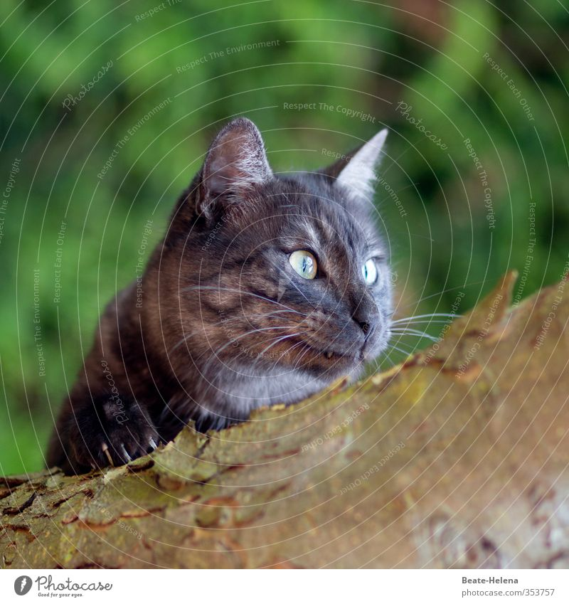 Cat Nature Green Animal Gray Brown Power Contentment Elegant Authentic Illuminate Adventure To enjoy Fitness To hold on Animal face