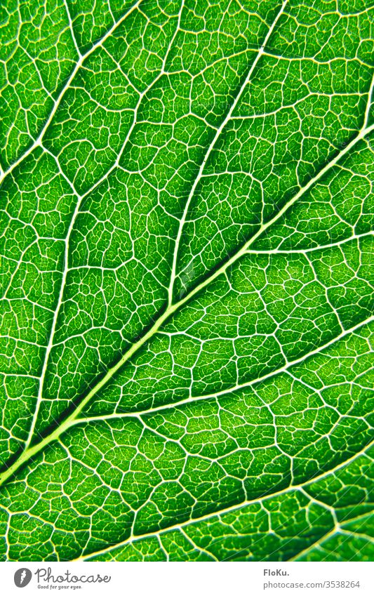 Close-up of the structure of a leaf flaked green Plant Vessel Macro (Extreme close-up) Rachis Photosynthesis bushes Structures and shapes Nature Corner