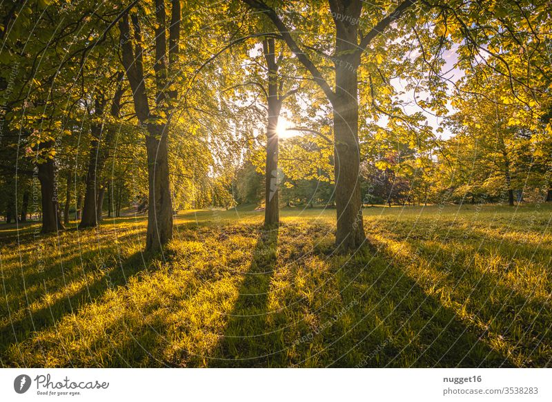 Forest against the light tree Nature Autumn flaked Exterior shot Colour photo Day Plant Deserted Environment natural Landscape Brown green Light Sunlight