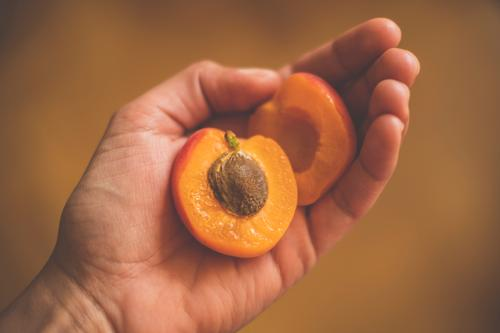 Two halves of an apricot with kernel in one hand Apricot Core Half Sliced Delicious Fruity Orange fruit by hand stop Food Sweet Retro vintage Interior shot