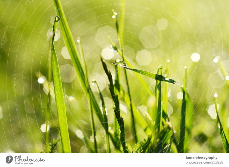 morning dew Nature Water Drops of water Summer Grass Blade of grass Meadow Fresh Wet Green Dew Sunrise Colour photo Exterior shot Close-up