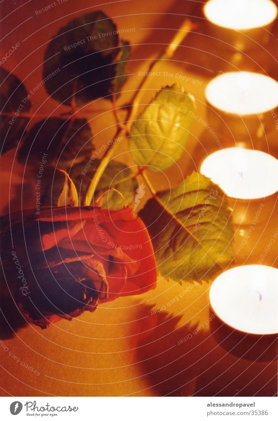 mood Rose-Light-Long-time Exposure -Wax