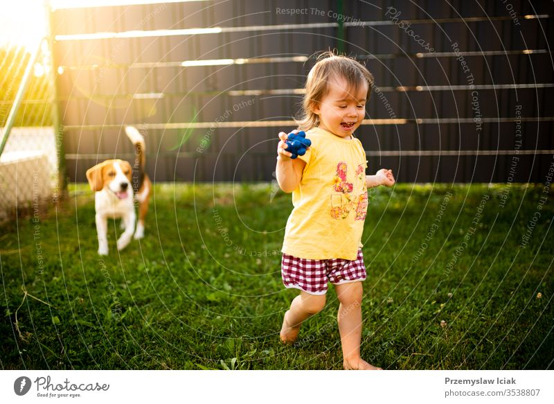 Cute baby girl chased by beagle dog in garden in summer day. 12-18 months Beagle Child Outdoors adorable animal background backyard barefoot beautiful canine