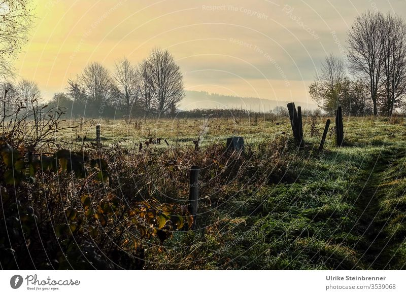 Autumn morning in the raised bog autumn mood Fen Schwenninger Moss trees Meadow Fence bushes Nature Landscape Grass Environment Nature reserve Seasons Morning