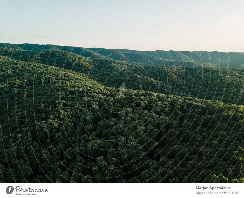 View of the beautiful forest in the mountains above aerial background beauty beech conservation countryside dawn day dusk ecology environment green greenery