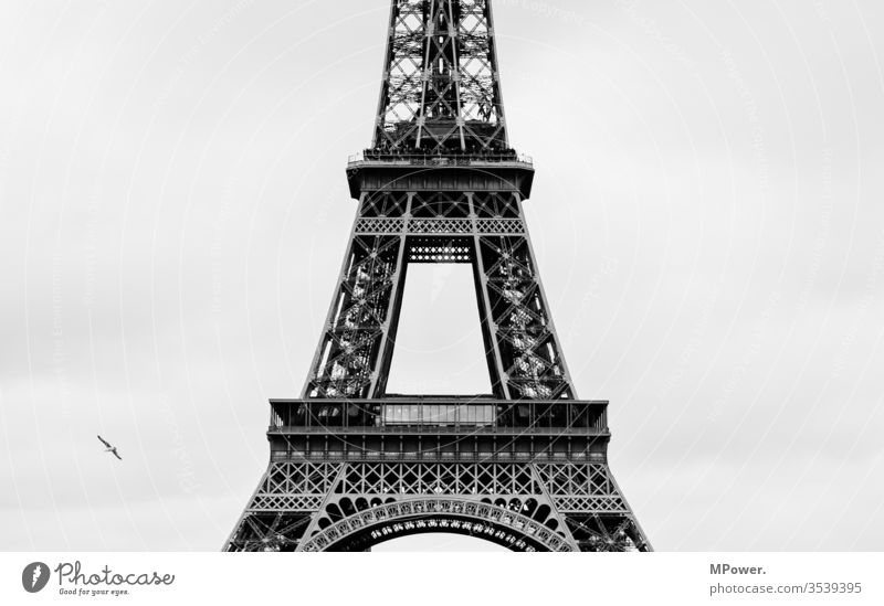 the Tower of Paris Eiffel Tower France birds Gray Lookout tower Vantage point Tourist Attraction Europe Landmark Sky Capital city Monument Tourism