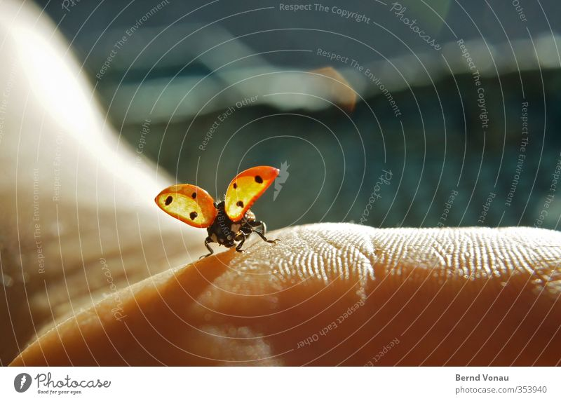 ...and departure! Arm Hand Ladybird 1 Animal Touch Flying Sit Free Cute Brown Red Spring fever Freedom Nature Escape Departure Back-light Close-up Colour photo